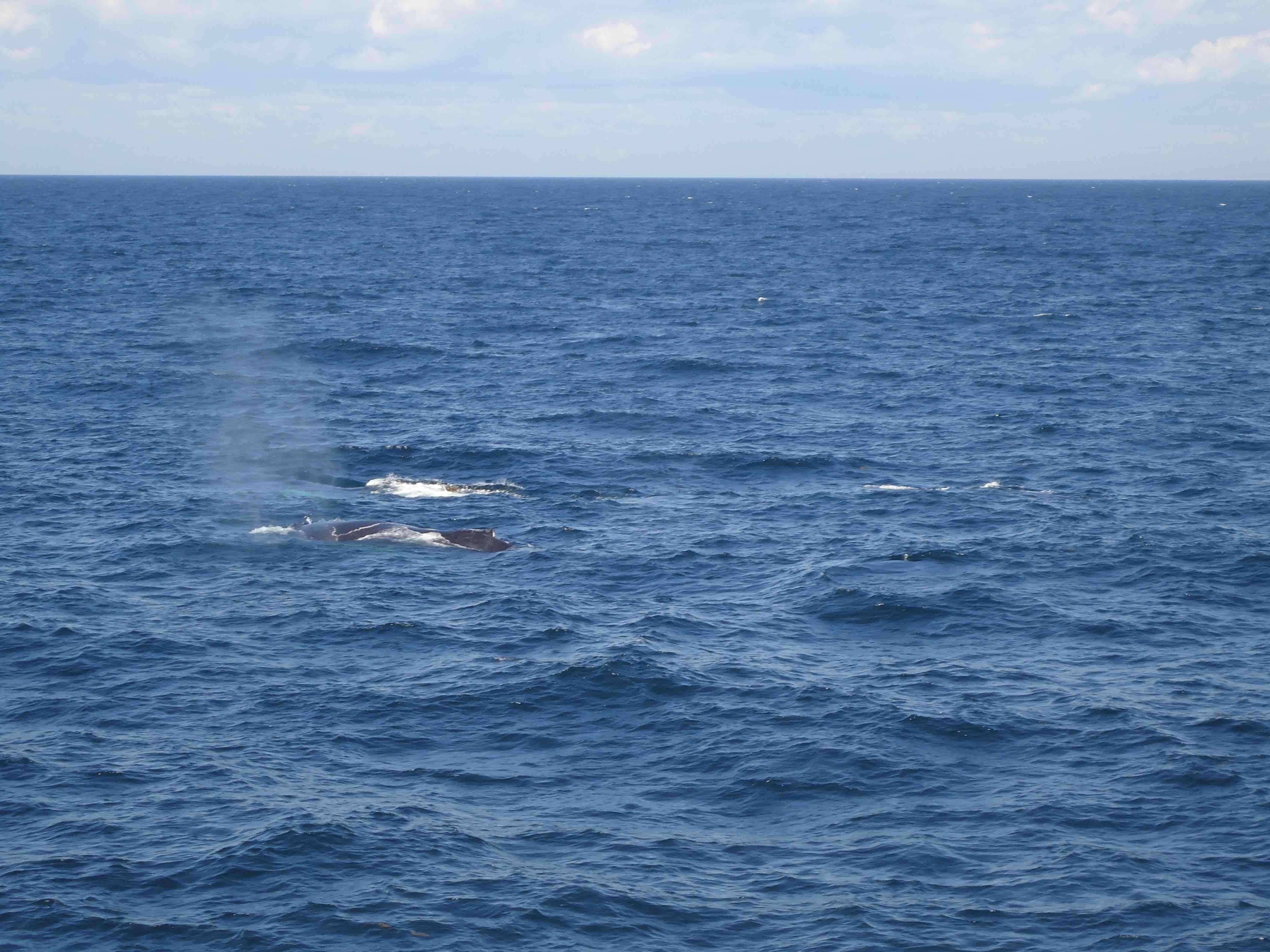 baleine boston