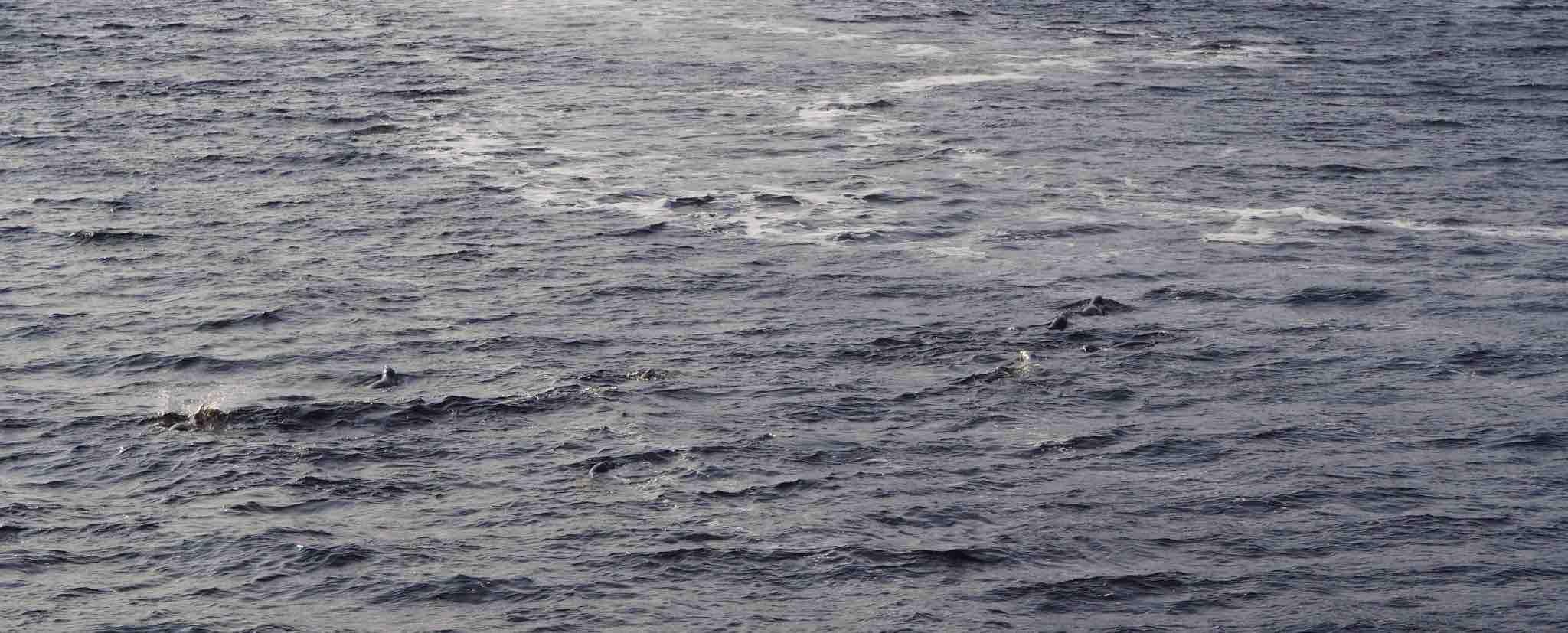 baleines Tadoussac voir des phoques