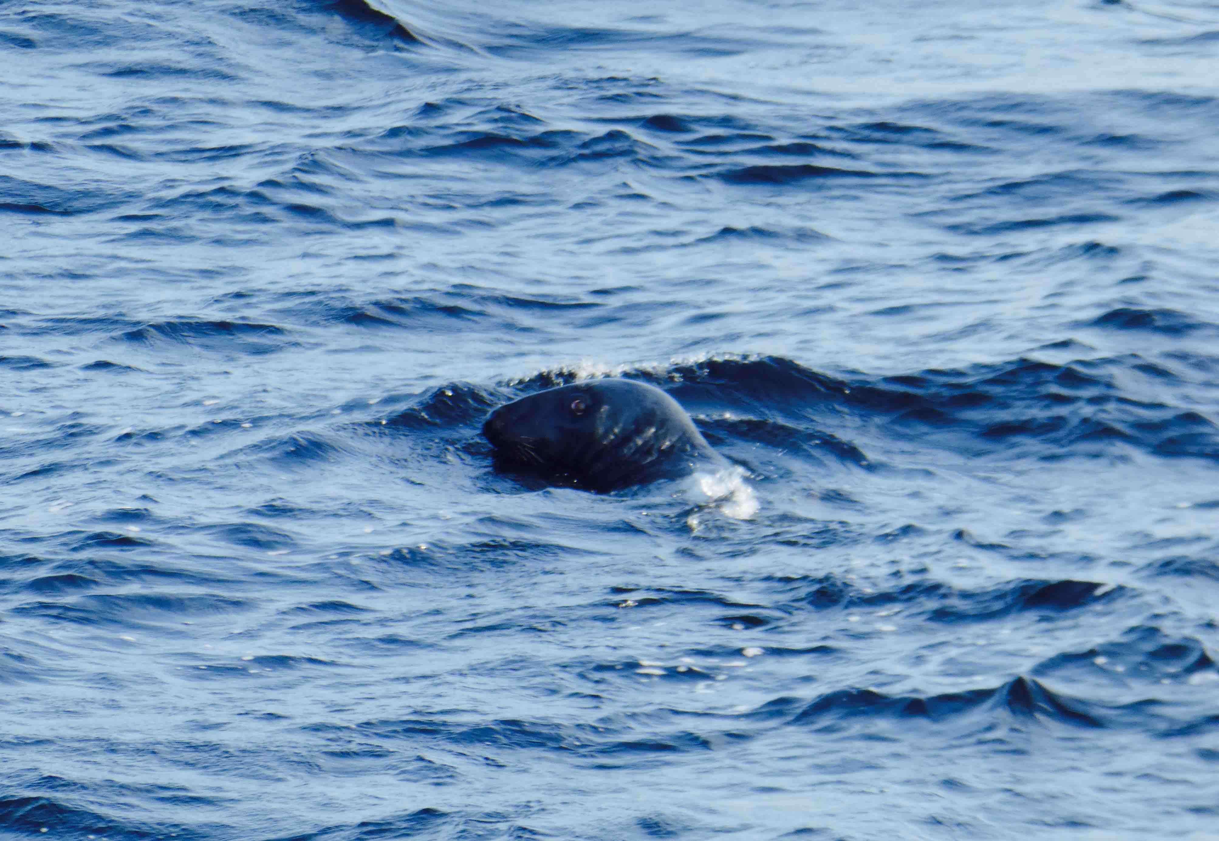 baleines Tadoussac observer des phoques
