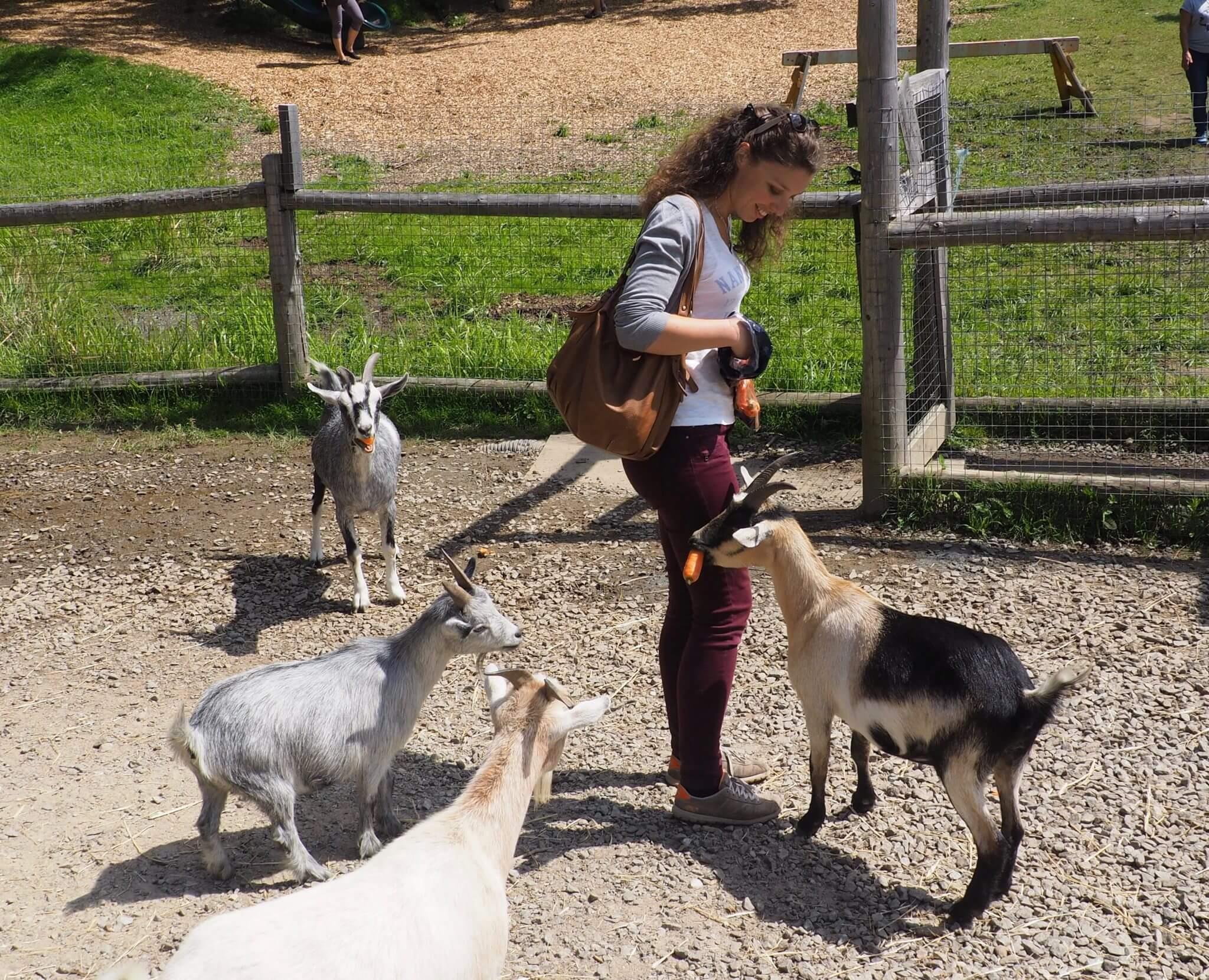 Visiter le Parc Oméga