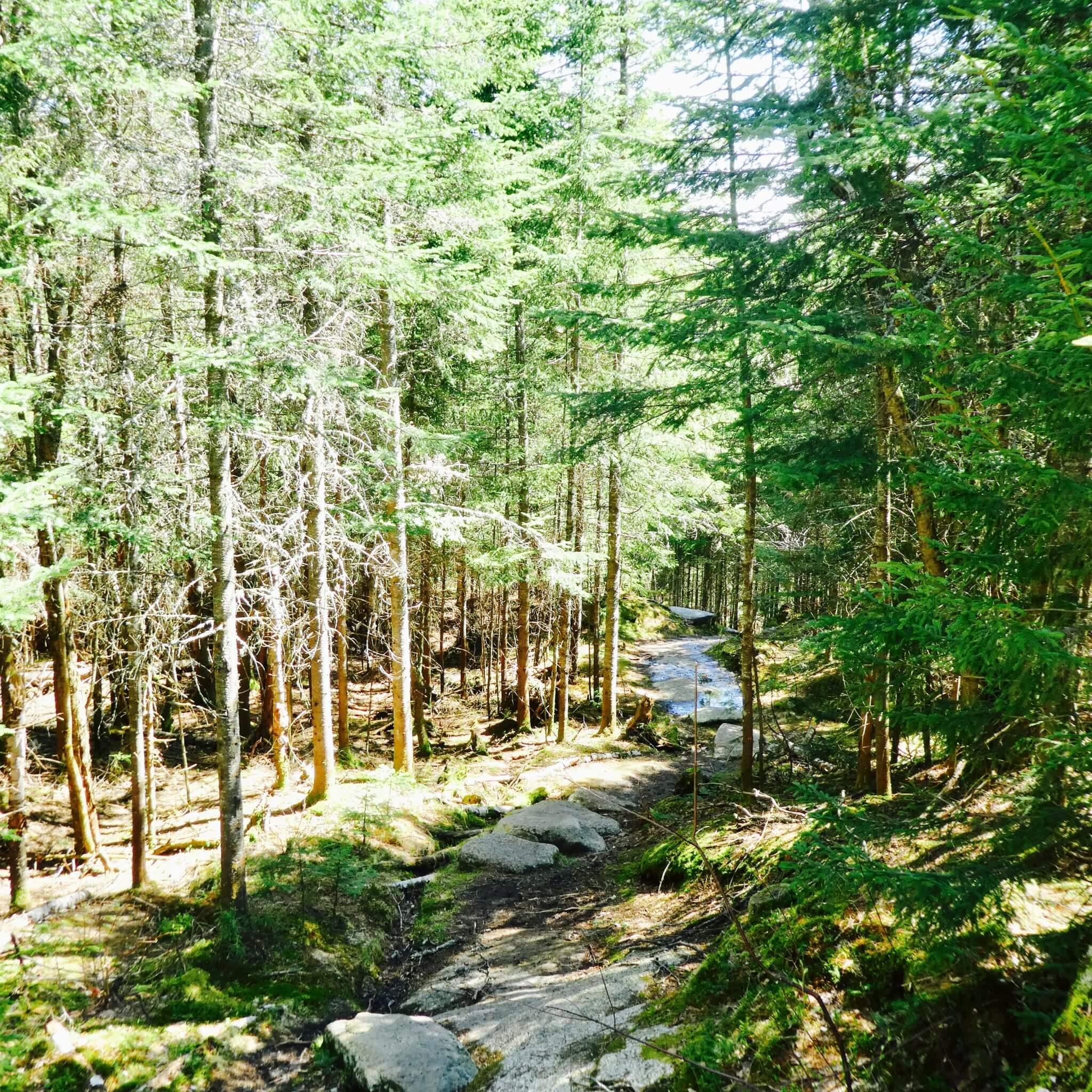 randonnée mont tremblant