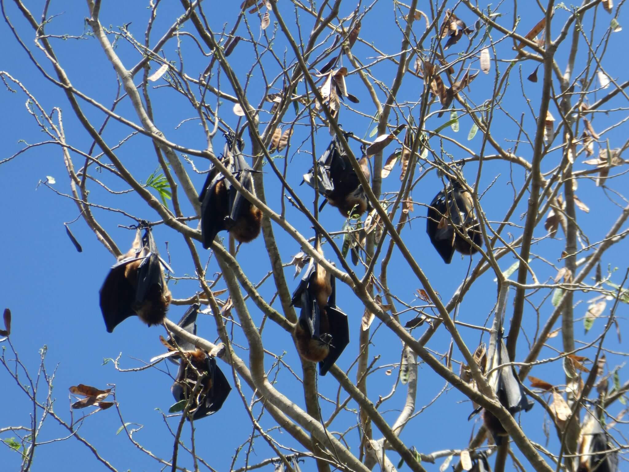 visiter le jardin de pamplemousses à l'ile maurice