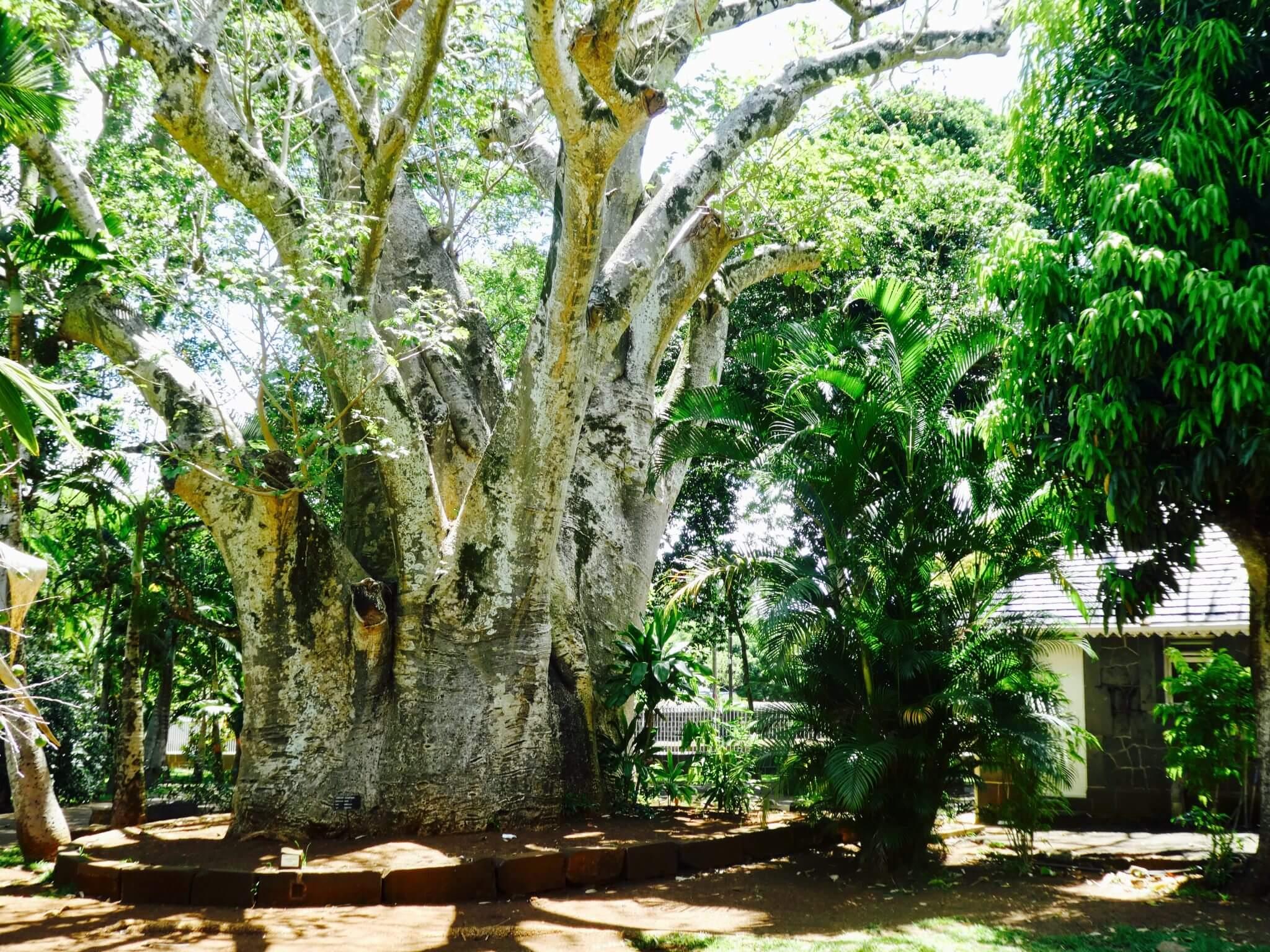 Visiter le jardin de pamplemousses l 39 ile maurice avis for Jardin a visiter