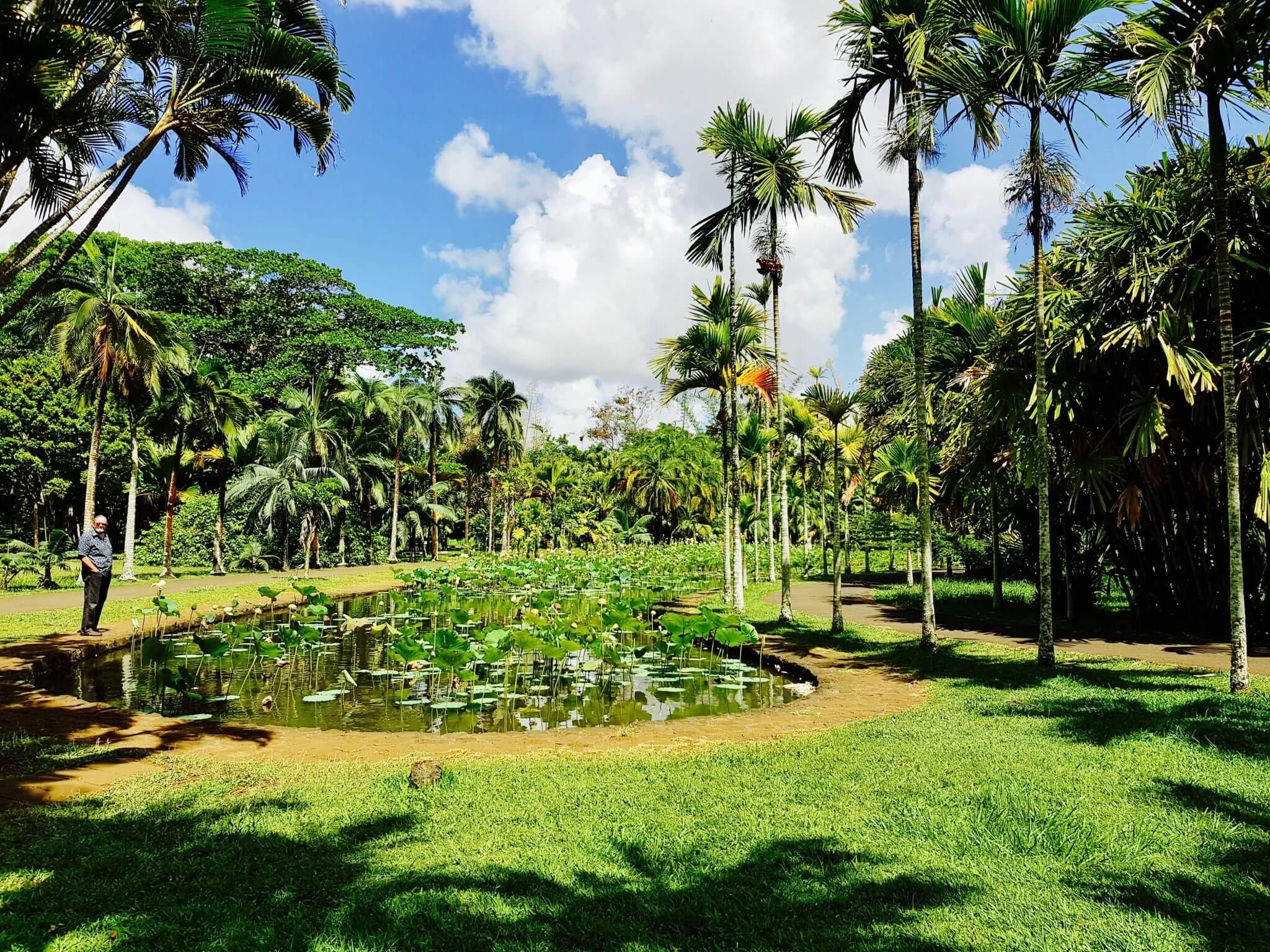 que faire au jardin de pamplemousses à l'ile maurice