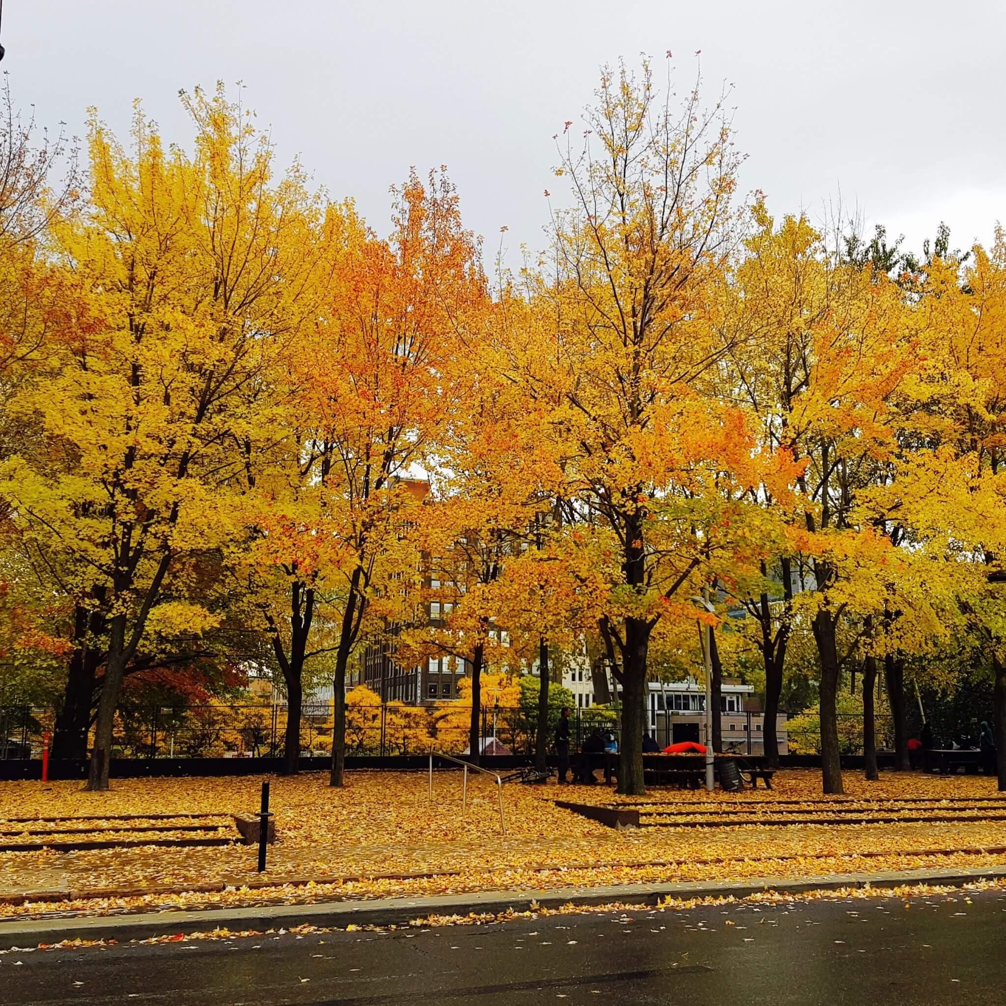 1 an à montréal automne