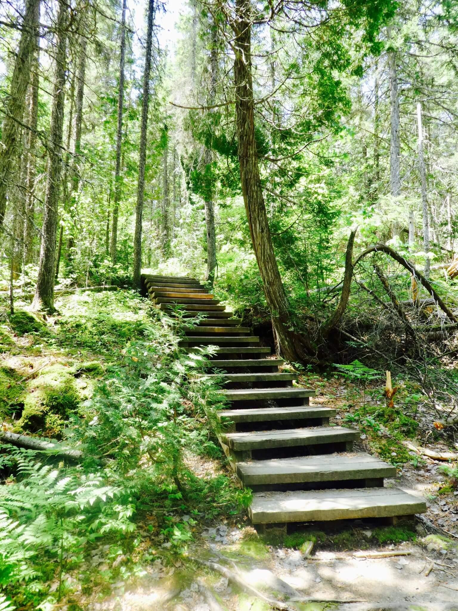 activités à faire à Montréal randonnée mont tremblant