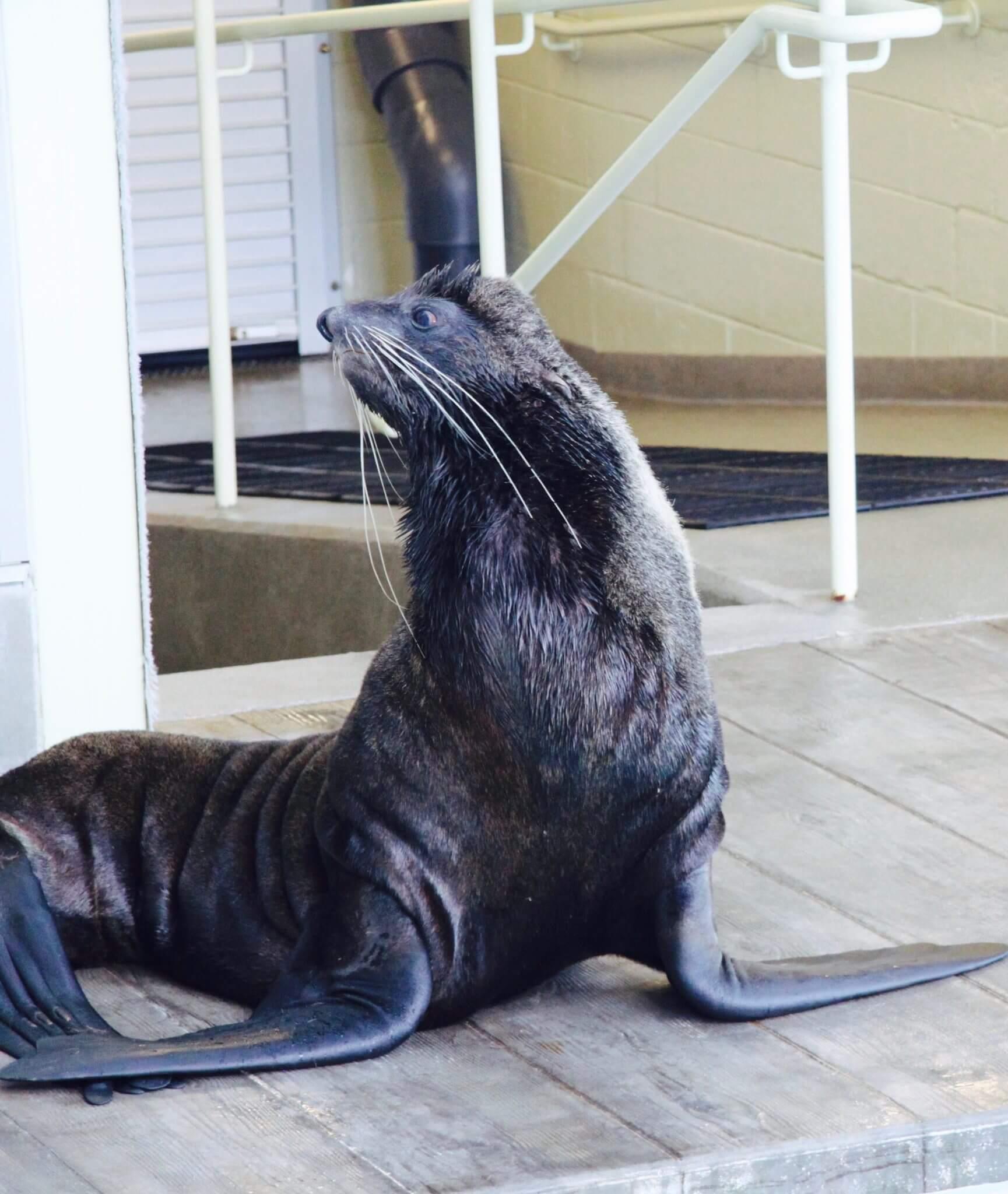 visiter l'aquarium de boston
